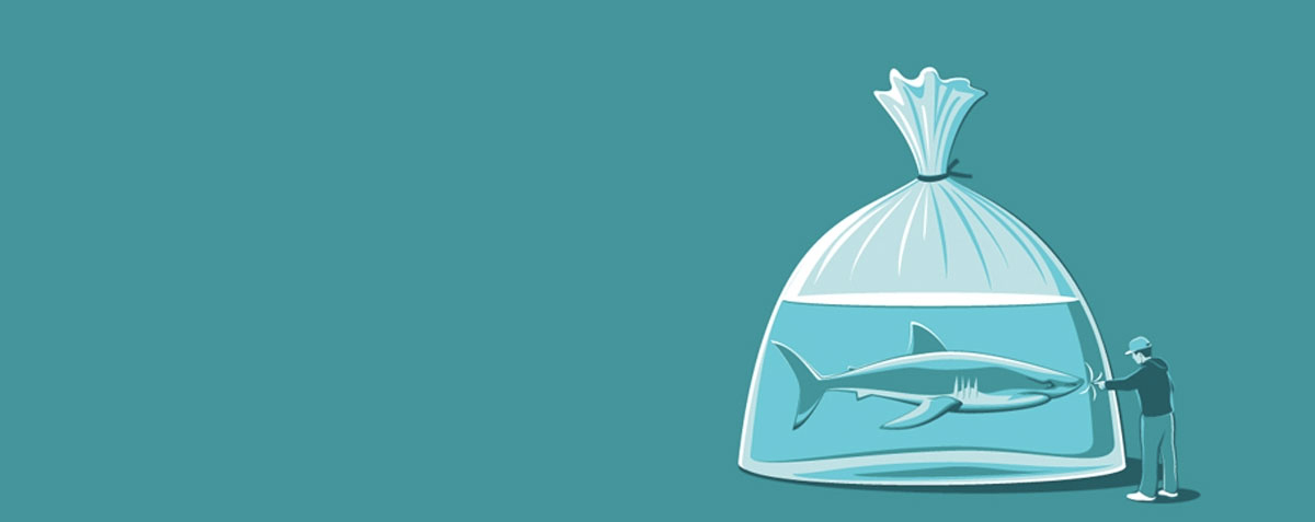 Stupidity-Sharks-l